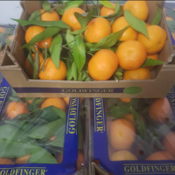 Full size clementines with leaves 2kg box spain